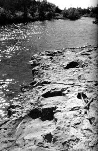 brontosaurus footprints