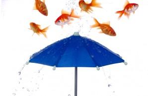 raining fish
