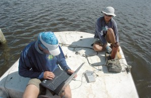 researching sharks