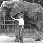elephant in captivity